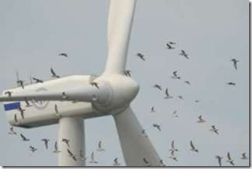 windmillwithbirds