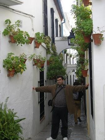 Obiective turistice Spania: Calleja de los Flores, Cordoba
