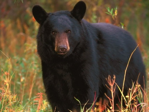 list of major species bears_www.wonders-world.com_1200