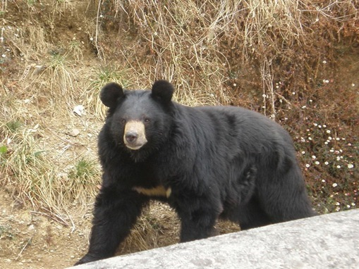 list of major species bears_www.wonders-world.com_1203