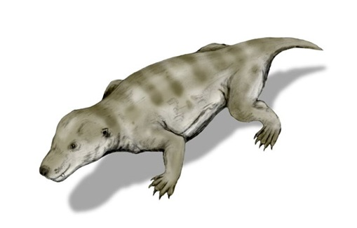 thrinaxodon