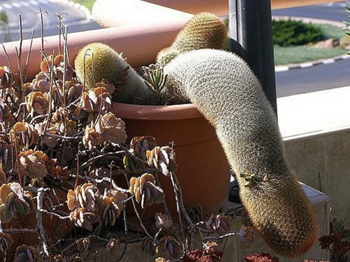 Most Suggestive Cacti On Earth 278