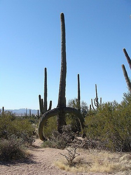 Most Suggestive Cacti On Earth 280