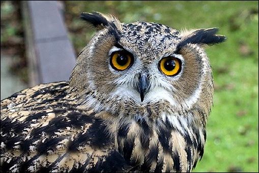 http://lh4.ggpht.com/_DeVkd7Dag10/TFAlmO-39VI/AAAAAAAADOU/hwN_gUrUnBw/Owls_thumb.jpg?imgmax=800
