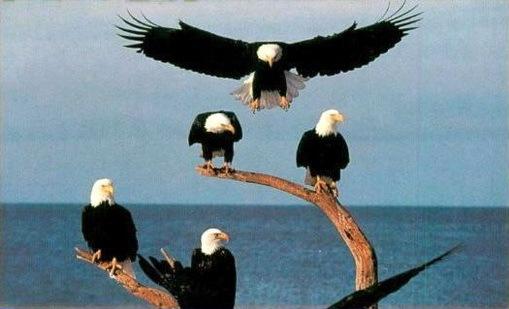http://lh4.ggpht.com/_DeVkd7Dag10/TFAlsk_duWI/AAAAAAAADOo/0Pxlav2PJPk/Eagles_thumb.jpg?imgmax=800