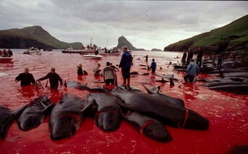 hasil pembunuhan massal ikan lumba lumba