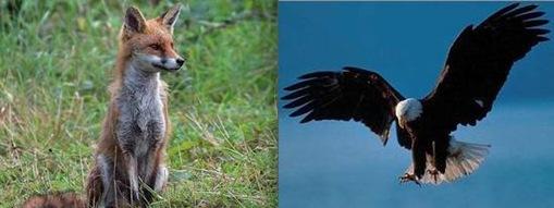 Bird + Fox