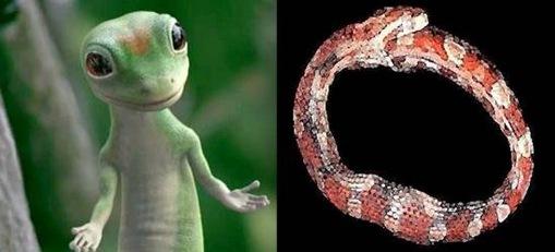 Hoop Snake + Lizard
