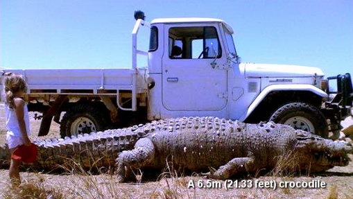 huge-crocodile