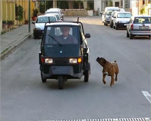 animals-attacking-cars-15
