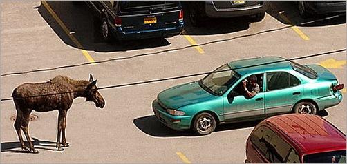 animals-attacking-cars-23