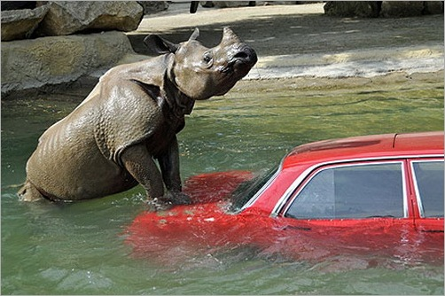 animals-attacking-cars-25