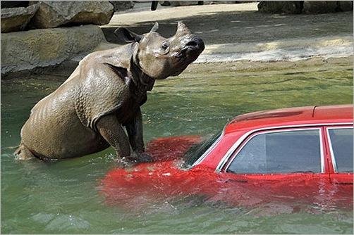animals-attacking-cars-25