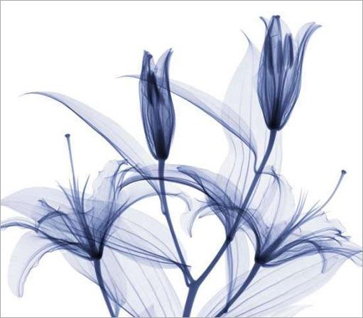 thumbs_thumbs_flowers-015