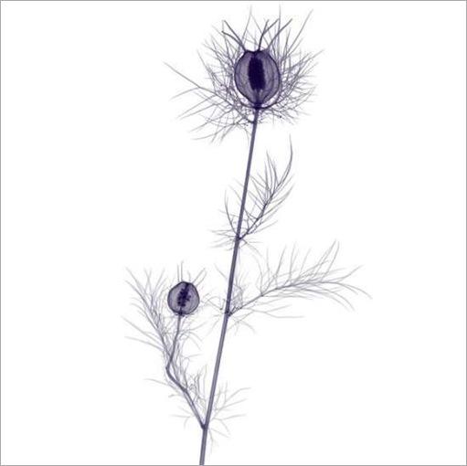 thumbs_thumbs_flowers-008