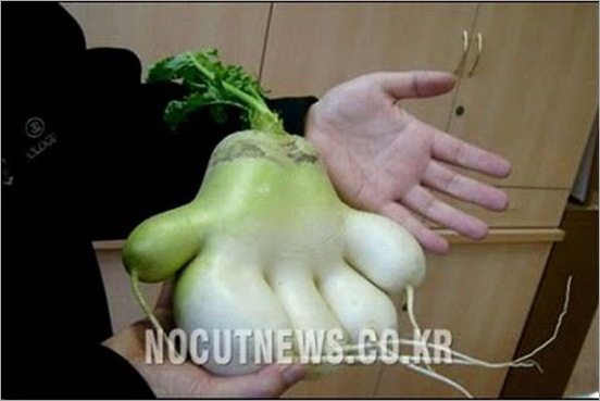 Vegetables unusual shape 02