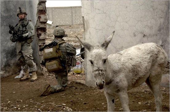 funny moment donkey life 04