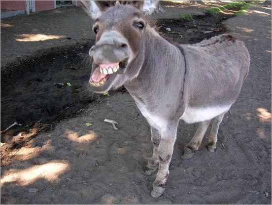 funny moment donkey life 07