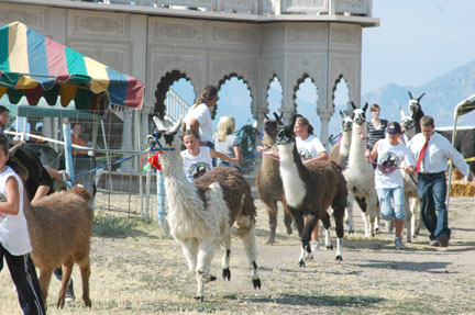 Llama Race at Krishna Temple