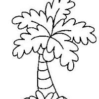 palmera2.jpg