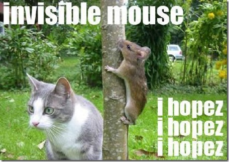 Pictures of Funny Animals (funny mouse) - Invisible Mouse...I Hope So