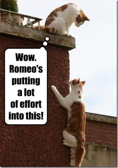 Funny Pictures: Meeting between Romeo and Juliet