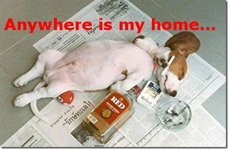 Funny Picture: Drunk dog