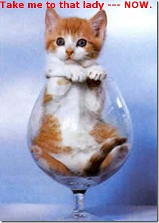 Funny Pictures: Kitty in a wine glass
