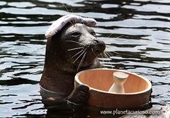 foca-banos-japon-insolita