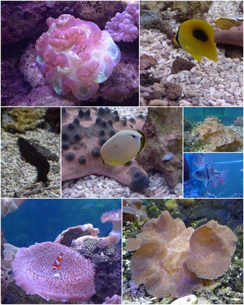 UMS Aquarium1