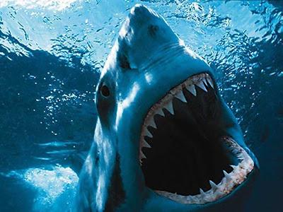 [GFx]Box sig! New style --Deep blue-- Shark