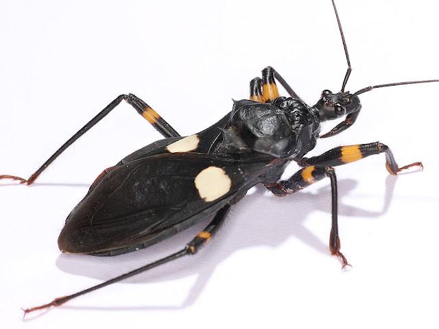 昆虫吧_百度贴吧
