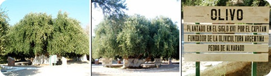 olivo 4100
