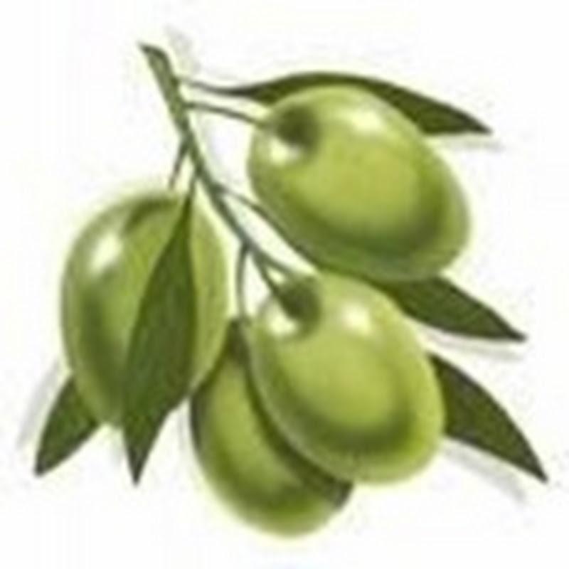 Día Nacional Argentino de la Olivicultura