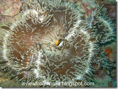 Dive Site 3_16 [1280x768]