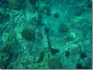 Maui Snorkeling_32 (Medium)