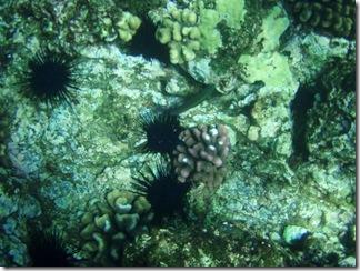 Maui Snorkeling_33 (Medium)