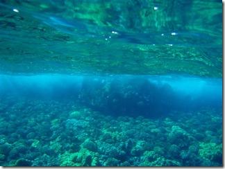 Maui Snorkeling_11 (1) (Medium)