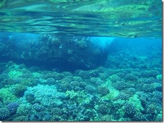 Maui Snorkeling_21 (1) (Medium)