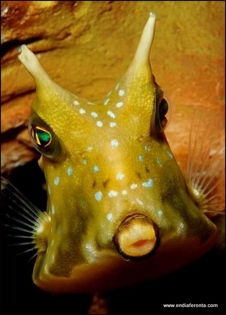 fish-faces20.jpg