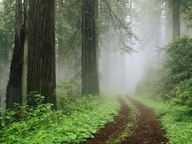 Redwood%20National%20Park%20in%20Fog%2C%20California