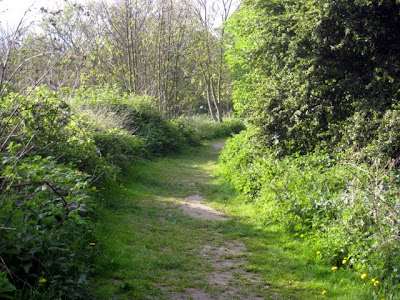 Trail in Bishops Park in London