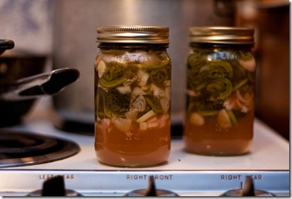 pickled-fiddleheads