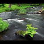 Beautyful Landscape (39).jpg