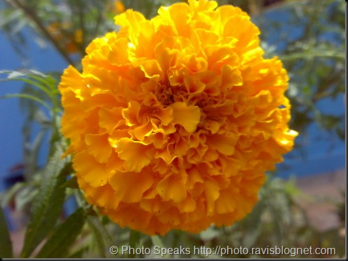 Yellow_Flower_3