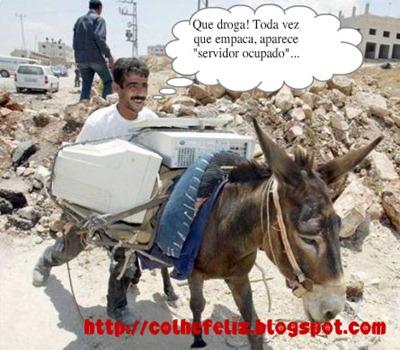 donkey_pc[1]
