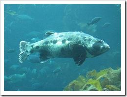 aquarium 011