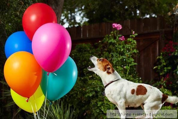 世界紀錄funny-everyday.blogspot.com0010