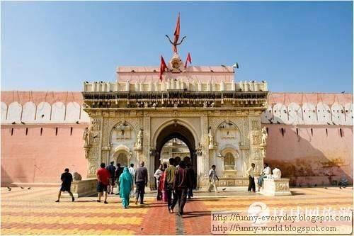 Karni Mata Temple008
