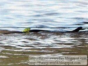 青蛙騎蛇 患難見真情